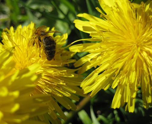 abellasilenca.jpg