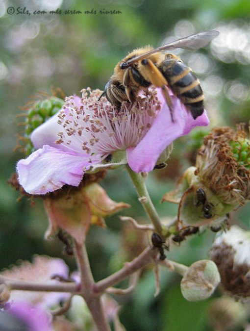 abellaesbarzer
